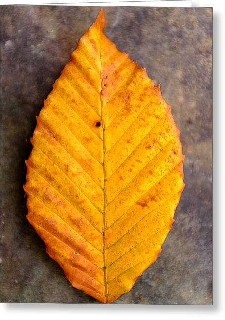 Autumn Beech Leaf On Stone Two Greeting Card by Chris Bordeleau