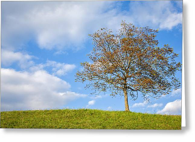 Greeting Card featuring the photograph Autumn Begins by Ian Middleton