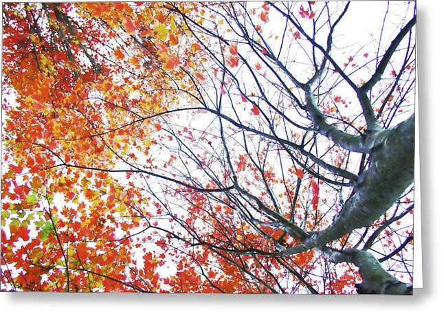 Autumn Bleeds Greeting Card