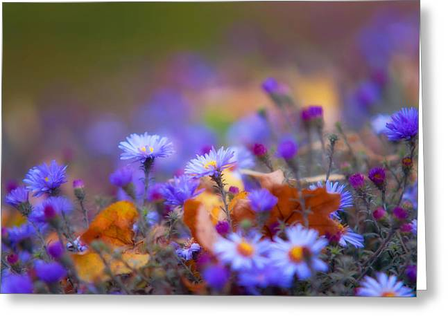 Autumn Blue Chrysanthemum Greeting Card