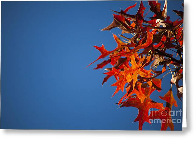 Autumn Blue Greeting Card by Wayne Moran