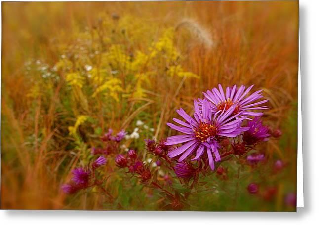 Autumn Blush Greeting Card by Tim Good