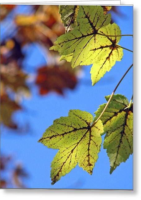 Autumn Bokeh  Greeting Card by Chris Anderson