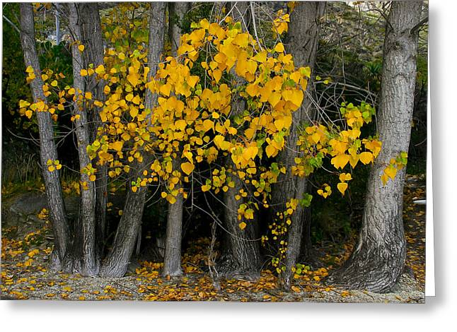 Autumn Breakout Greeting Card