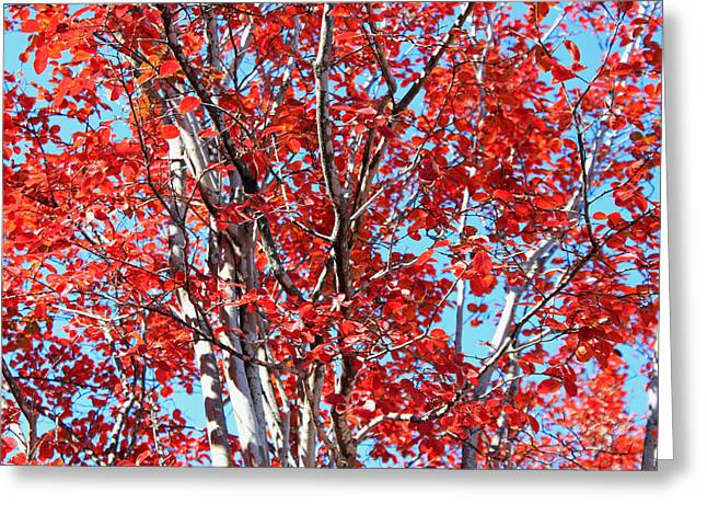 Autumn Brilliance V Greeting Card by Suzanne Gaff