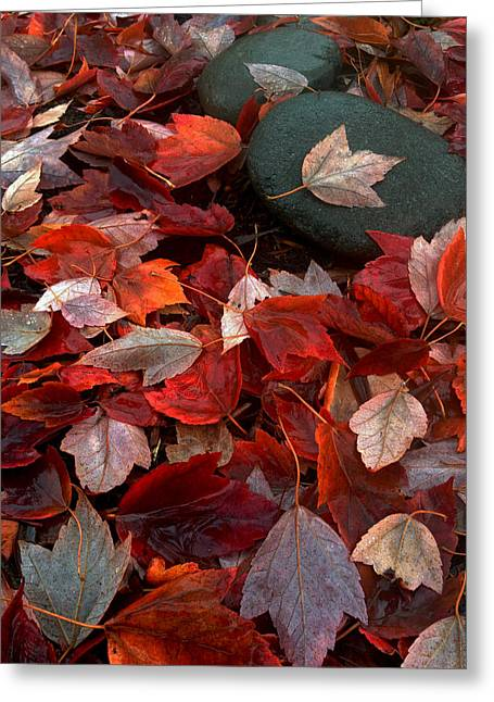 Autumn Broadcast Greeting Card by Gwyn Newcombe