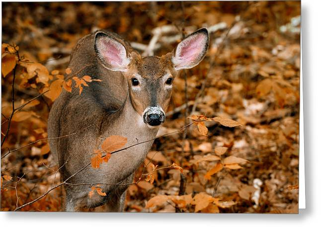 Autumn Buck Greeting Card by Tracy Munson