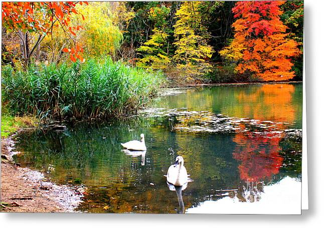 Autumn By The Swan Lake Greeting Card