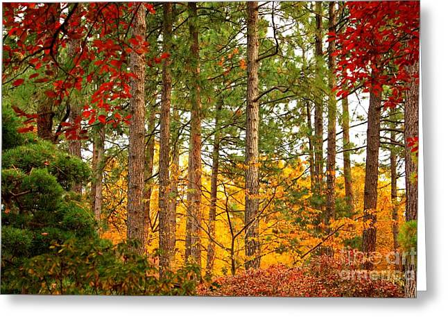 Autumn Canvas Greeting Card by Carol Groenen