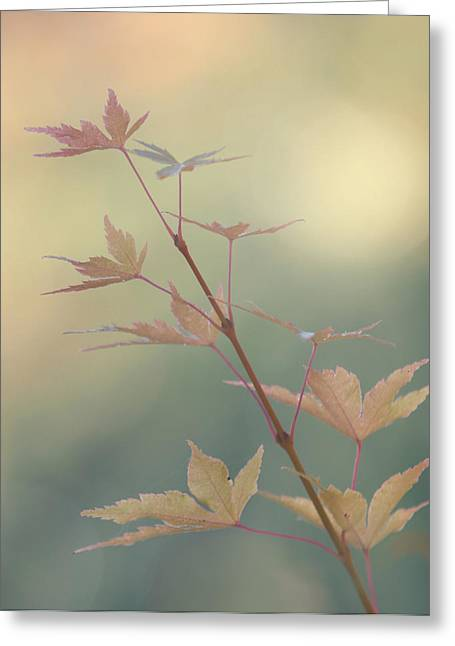 Autumn Changes Greeting Card by Angie Vogel