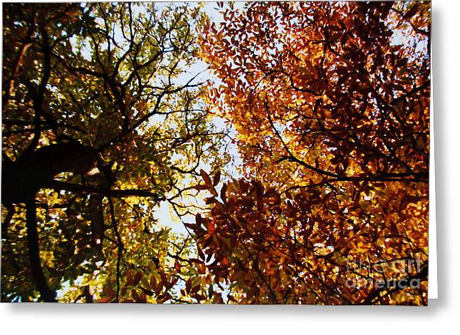 Autumn Chestnut Canopy   Greeting Card