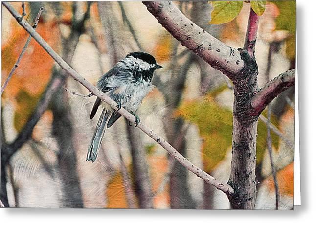 Autumn Chickadee  Greeting Card by Maria Angelica Maira