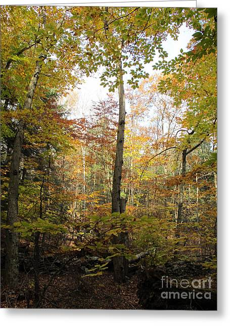 Autumn Clearing Greeting Card by Linda Marcille
