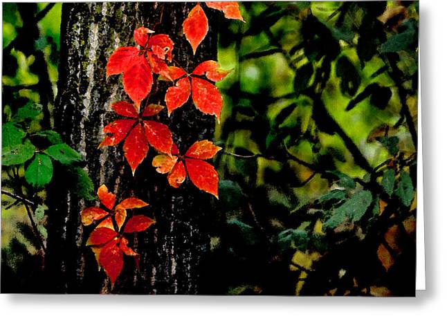 Autumn Climber Greeting Card