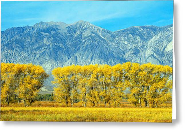 Autumn Color Along Highway 395, Sierra Greeting Card by Panoramic Images