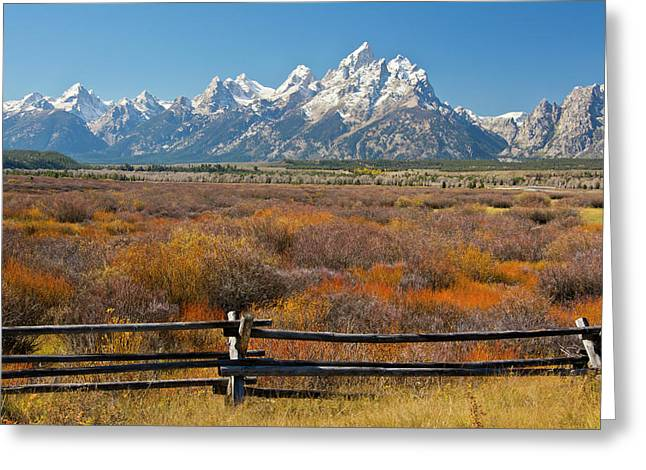 Autumn Color, Grand Tetons, Buck Greeting Card by Michel Hersen