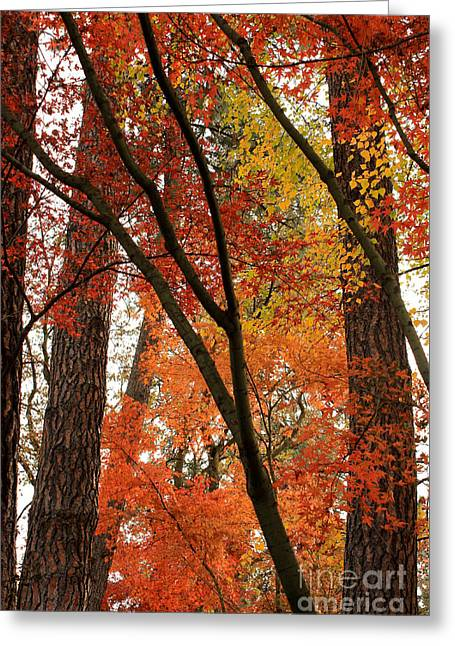 Autumn Color Revival Greeting Card by Carol Groenen
