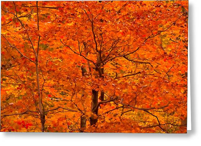 Autumn Color Splash Greeting Card