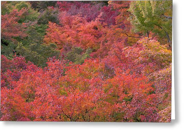 Autumn Colors And Temple, Kyoto, Japan Greeting Card by Peter Adams