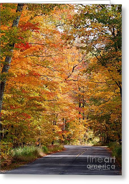 Autumn Colors - Colorful Fall Leaves Wisconsin IIi Greeting Card