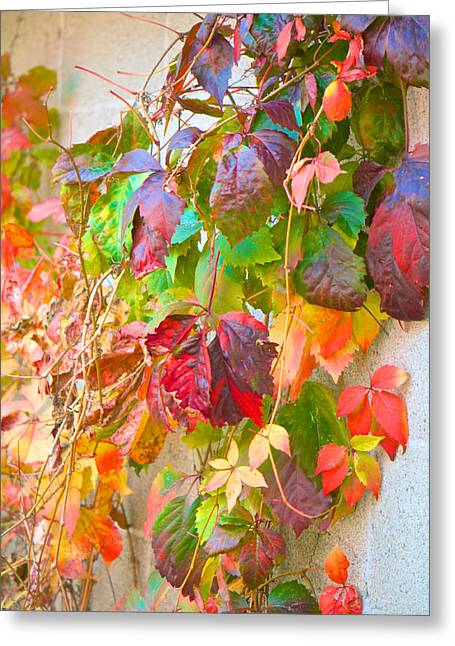 Autumn Colors Of Virginia Creeper Greeting Card