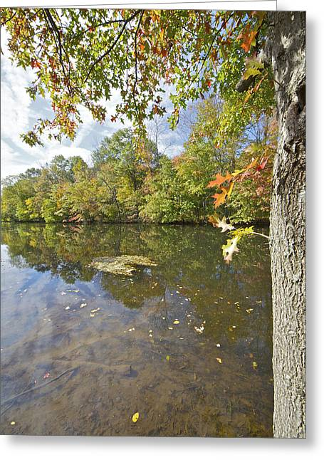 Autumn Colors On The Delaware And Raritan Canal  Greeting Card by David Letts