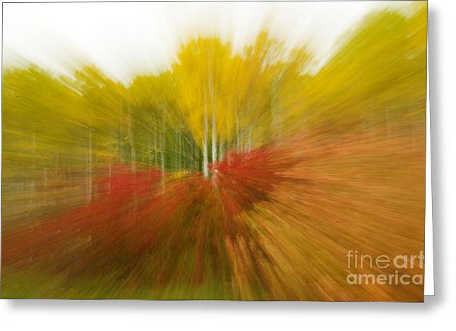 Autumn Colors Greeting Card by Vivian Christopher