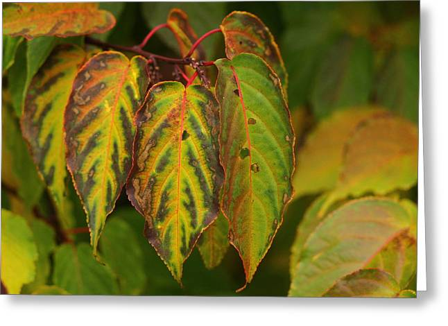 Autumn Colours Greeting Card by Jacqui Collett
