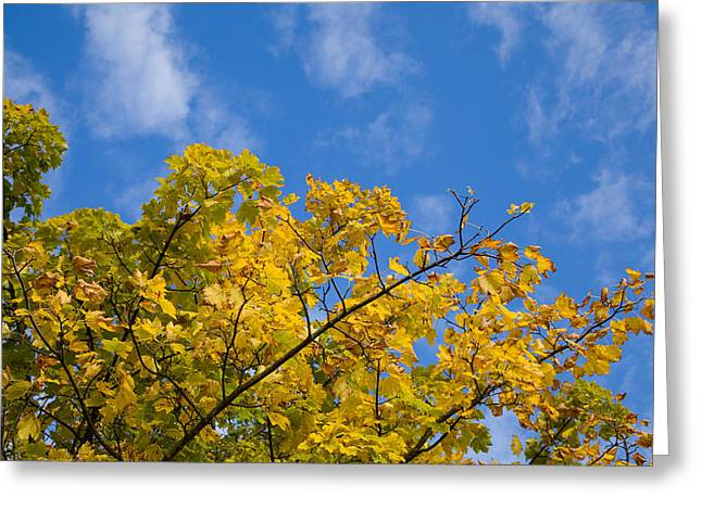 Autumn Colours On An October Morning . Greeting Card by Paul Lilley
