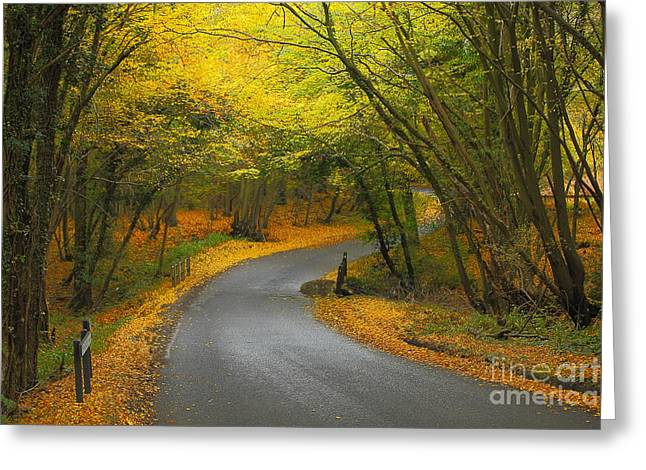 Autumn Colours Greeting Card by Stephen Dowdell