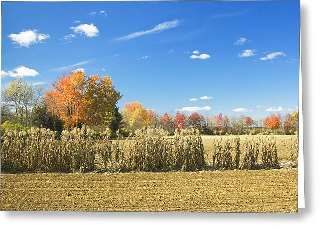 Plowed Fields Greeting Cards - Autumn Corn Field After Harvest In Maine Photo Greeting Card by Keith Webber Jr