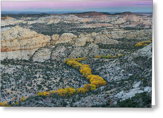 Autumn Cottonwood Trees Outline Greeting Card