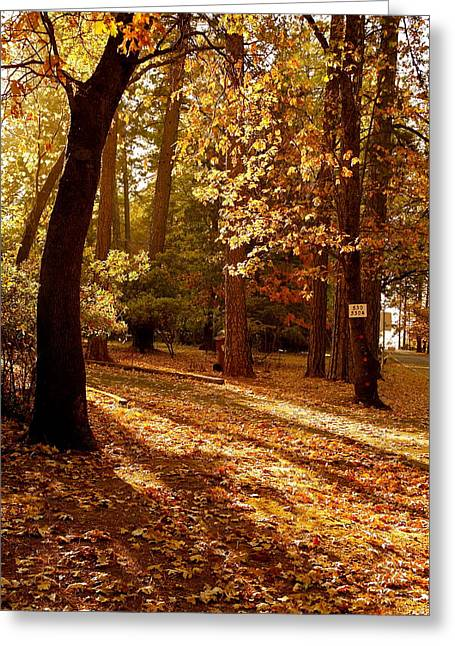 Autumn Country Lane Evening Greeting Card