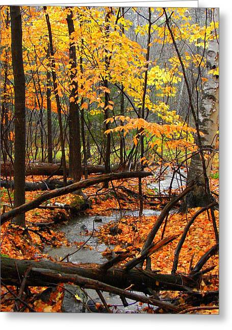 Greeting Card featuring the photograph Autumn Creek In The Rain by Rodney Lee Williams