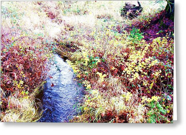 Greeting Card featuring the photograph Autumn Creek by Vanessa Palomino