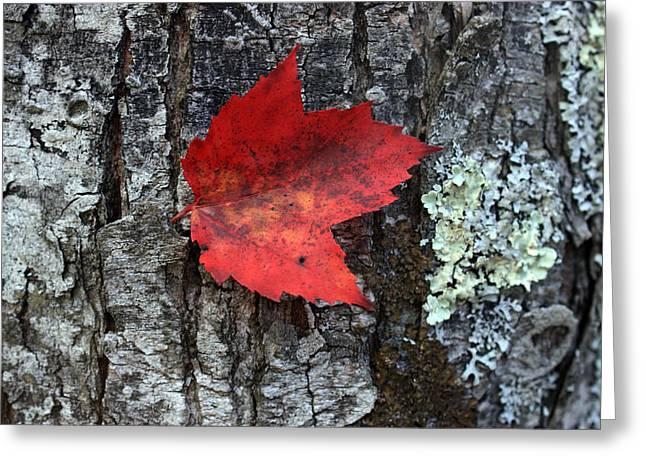 Autumn Day Greeting Card by Mark Ashkenazi