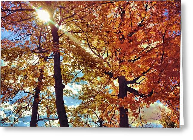 Autumn Days Greeting Card by Dan Sproul