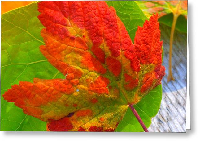 Autumn Delight Greeting Card by Karen Horn