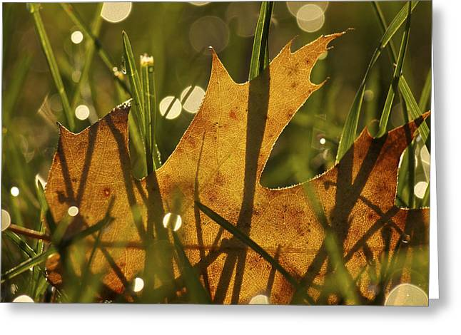 Autumn Dew Greeting Card by Penny Meyers
