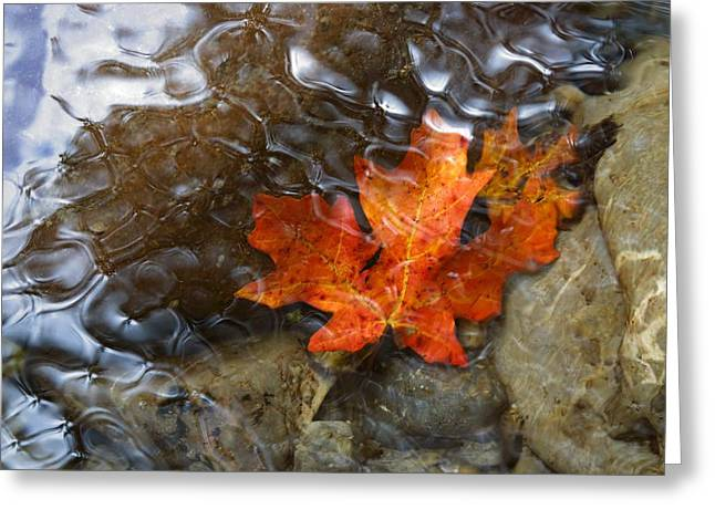 Autumn Down Under Greeting Card