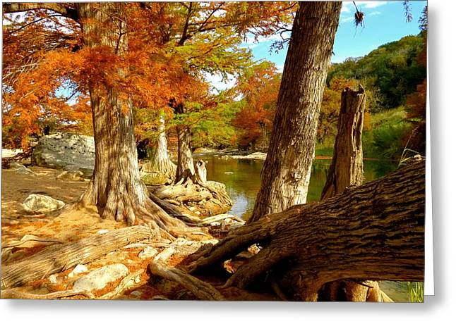Greeting Card featuring the photograph Autumn Dreams by David  Norman
