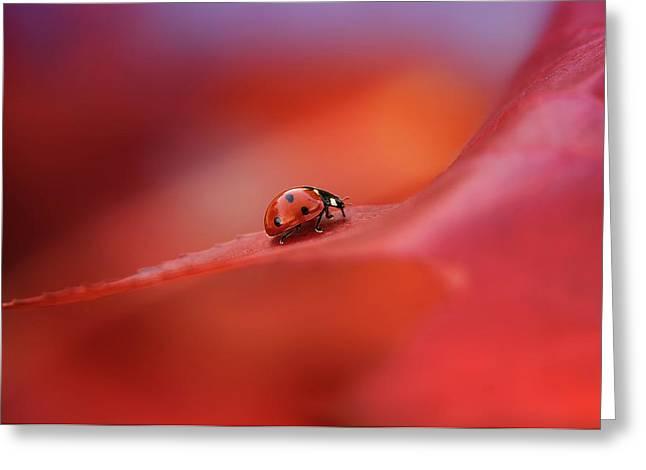 Autumn Greeting Card by Ellen Van Deelen