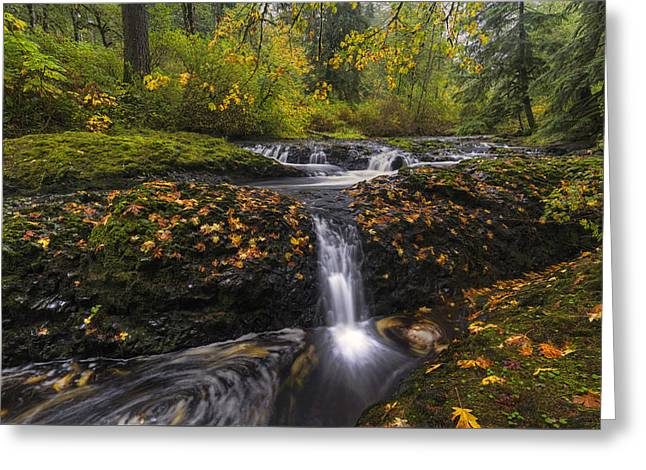 Autumn Euphoria  Greeting Card by Mark Kiver