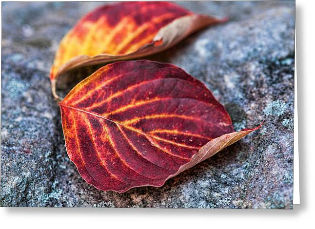 Autumn Family Tree Greeting Card