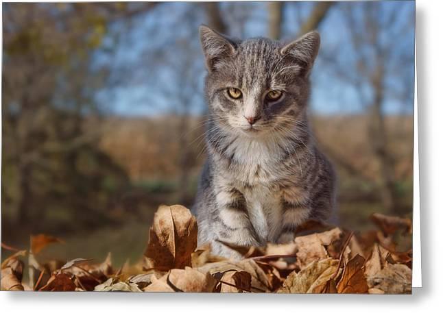Autumn Farm Cat #2 - Horizontal Greeting Card by Nikolyn McDonald