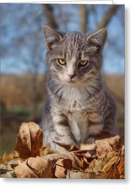 Autumn Farm Cat - 2 Greeting Card by Nikolyn McDonald