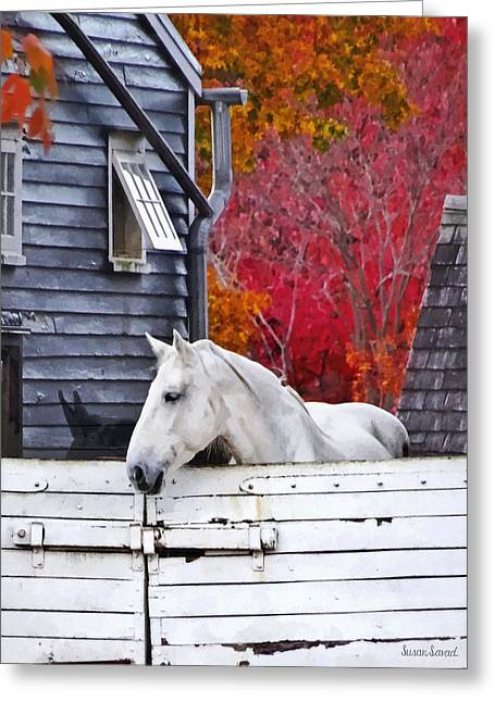 Autumn Farm With White Horse Greeting Card by Susan Savad