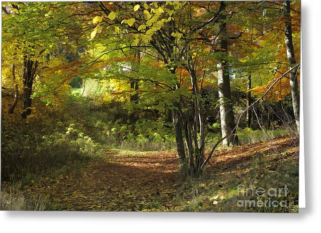 Autumn Feeling Greeting Card by Lutz Baar