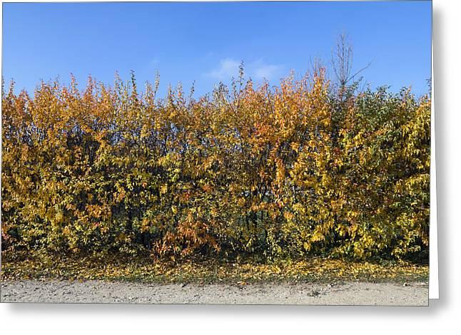 Autumn Fence Greeting Card by Aleksandr Volkov