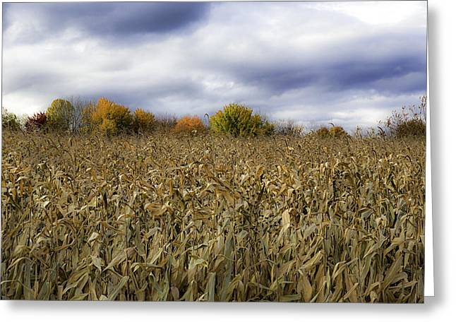 Autumn Field Greeting Card by Sara Hudock